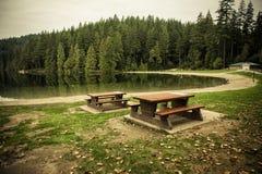 Skog och lake Royaltyfri Fotografi