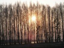 Skog och lake Arkivbilder