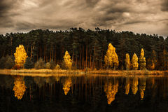Skog- och landskapintelligensreflexion på sjön royaltyfri fotografi