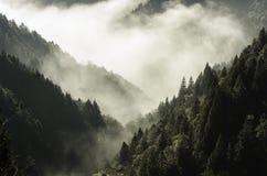 Skog och mist i morgonen Royaltyfri Bild