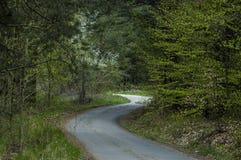 Skog och olika träd med det nya bladet, blomningen och vägen i vår på det Plana berget Arkivfoto