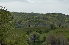 Skog och olika träd med det nya bladet och blomningen i vår på det Plana berget Arkivbilder