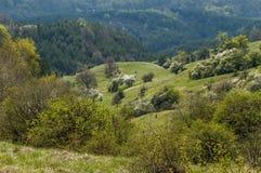 Skog och olika träd med det nya bladet och blomningen i vår på det Plana berget Fotografering för Bildbyråer