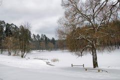 Skog och sjö i det insnöat vintern Fotografering för Bildbyråer