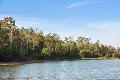 Skog och sjö i sommar och bakgrund för blå himmel Royaltyfri Bild