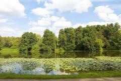 Skog och sjö med näckrors Arkivbilder