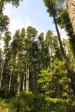 Skog och sky Fotografering för Bildbyråer