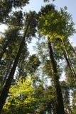 Skog och sky Arkivfoto