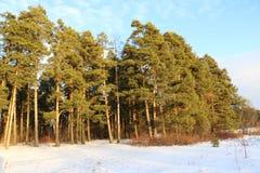 Skog och snö Fotografering för Bildbyråer