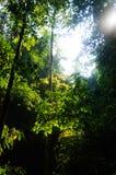 Skog och stora träd på Thailand Royaltyfria Bilder