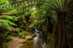 Skog och ström Arkivfoto
