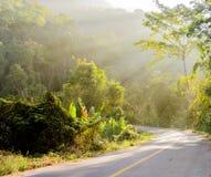 Skog och väg med solstrålen Arkivbild