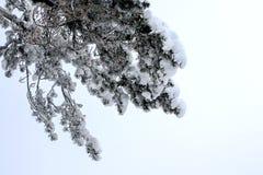 Skog och vinter Arkivfoto