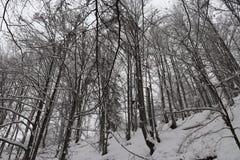 Skog och vinter bland bergen arkivfoto