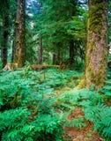 Skog Oregon arkivfoton