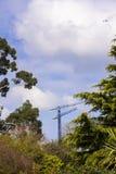 Skog p? bakgrunden av kranar och konstruktion Natur och civilisation Sikten av tornkranen till och med parkerar och arkivbilder