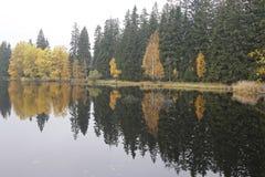 Skog på bankerna av dammet Royaltyfri Bild
