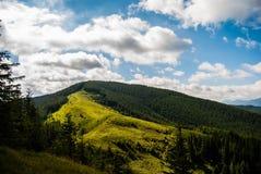 Skog på berget Arkivfoto