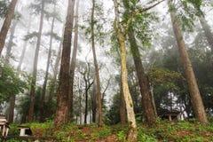 Skog på berget med dimma Arkivfoto