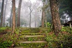 Skog på berget med dimma Royaltyfria Bilder