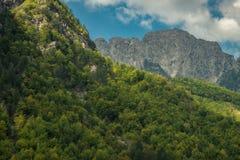 Skog på bergssidan och det molniga bergmaximumet royaltyfria bilder