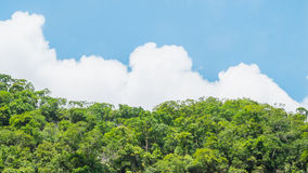 Skog på blå himmel Skog med molnigt , Skog på den blåa himlen Fotografering för Bildbyråer