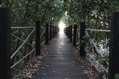 Skog på bred flodmynning av en flod arkivfoton
