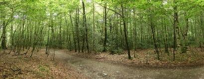 Skog på Caminoen de Santiago i Roncesvalles arkivbild