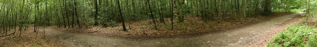 Skog på Caminoen de Santiago i Roncesvalles arkivfoto