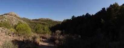 Skog på Caminoen de Santiago i Roncesvalles royaltyfri bild