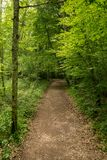 Skog på Caminoen de Santiago vid Roncesvalles royaltyfri fotografi