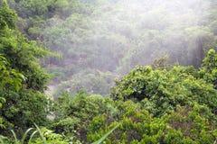 Skog på den Iguazu nationalparken i den argentinska sidan royaltyfri foto