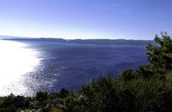 Skog på den kroatiska kusten Arkivbilder