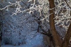Skog på den snöig dagen Royaltyfri Fotografi