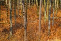 Skog på den tidiga våren Royaltyfri Bild