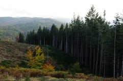 Skog på det Tuscany berget Royaltyfria Bilder