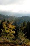 Skog på det Tuscany berget Royaltyfri Bild
