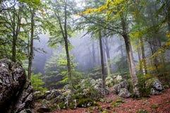 skog på en frostig morgon Arkivbilder