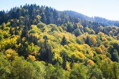 Skog på en kulle i nedgången Royaltyfria Bilder