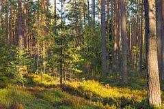 Skog på en solig dag Royaltyfri Fotografi