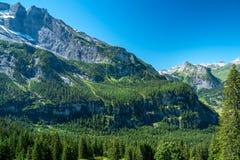 Skog på ett berg arkivbild