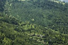 Skog på ett berg med stenar royaltyfri foto
