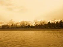 Skog på flodbreda flodmynningen Royaltyfria Bilder