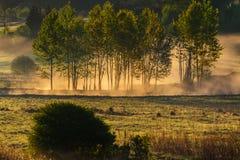 skog på gryning, träd i dimma royaltyfri bild
