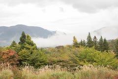 Skog på Hakone i molnig dag, Japan Royaltyfria Foton