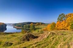 Skog på lakelandskap i höst Arkivbild