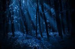 Skog på månbelyst natt arkivfoto
