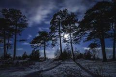 Skog på natten med månsken Arkivbild