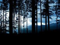 Skog på skymningen Royaltyfri Bild