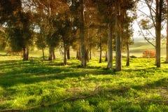 skog på solnedgången arkivfoton